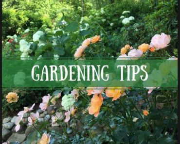 Boost Your GARDENING with These Tips